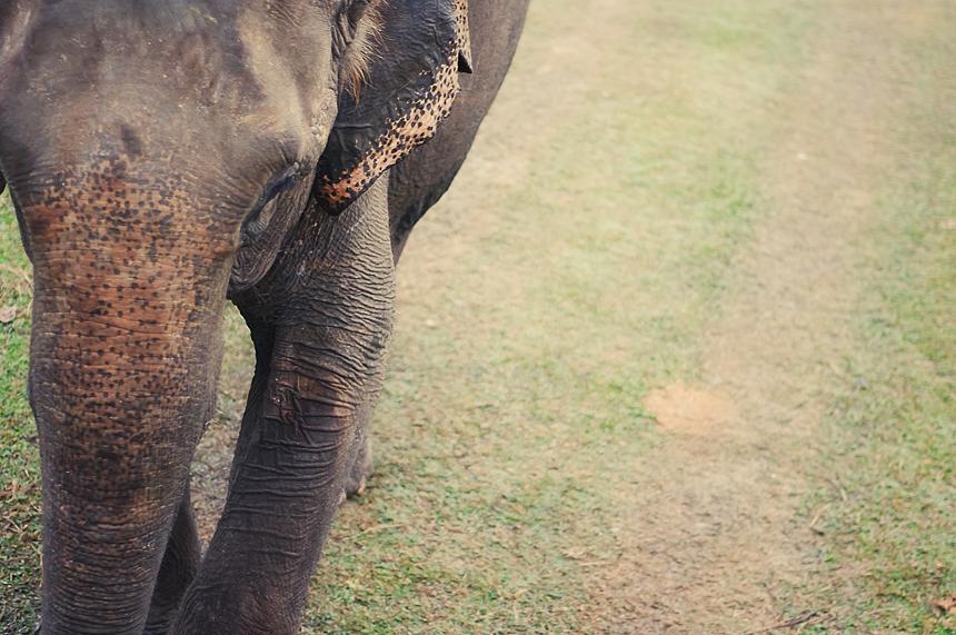 Random elephant