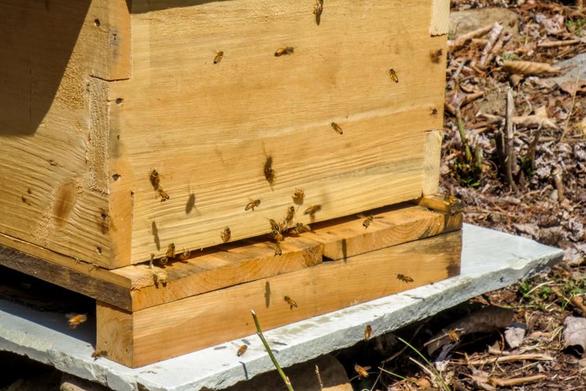 RTC Bees-2