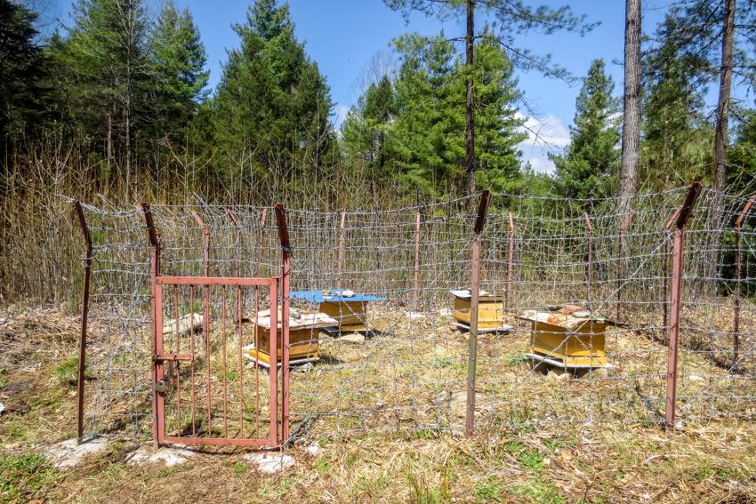RTC Bees